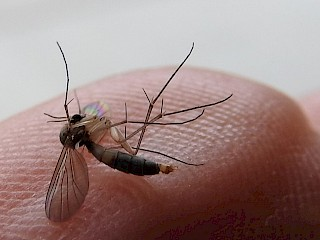 Not Mosquitoes Article Image